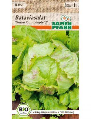 Bio Bataviasalat Grazer Krauthäuptel 2