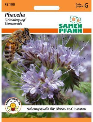 Phacelia Gründung Bienenweide