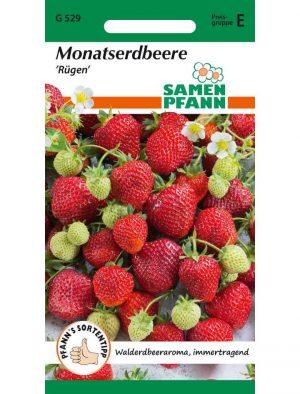 Monatserdbeeren Rügen