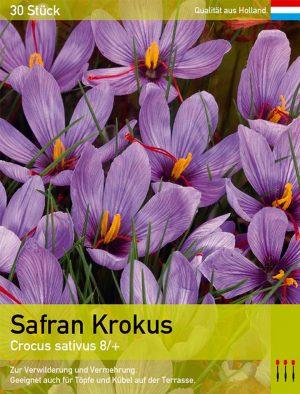 Safran Krokus