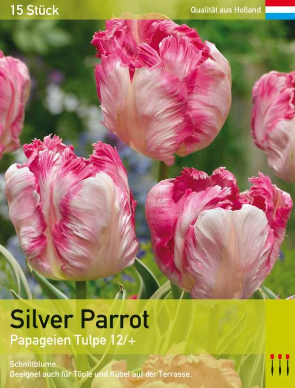 Silver Parrot