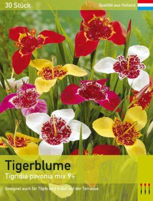 Tigerblume