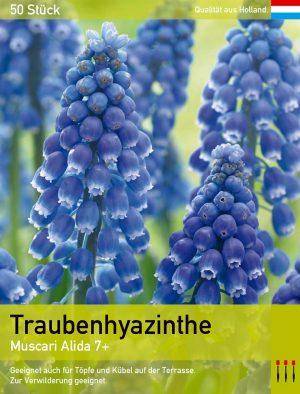 Traubenhyazinthe