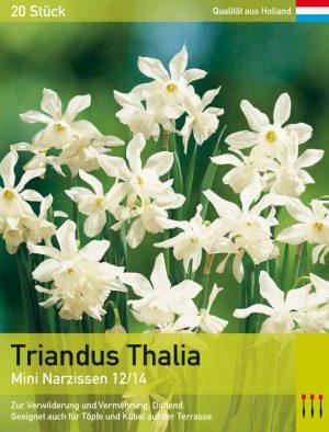 Triandus Thalia