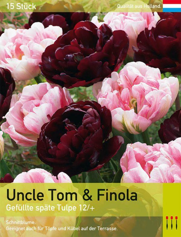 Uncle Tom & Finola