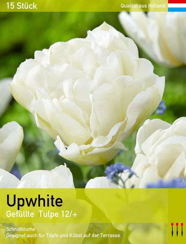 Upwhite