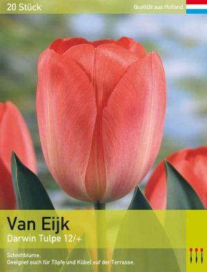 Van Eijk