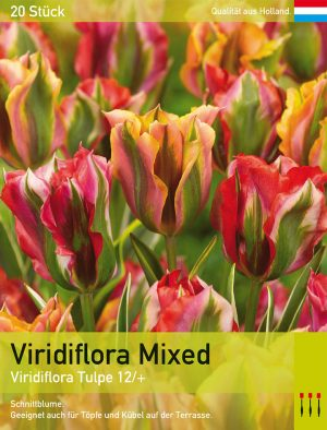 Viridiflora Mixed