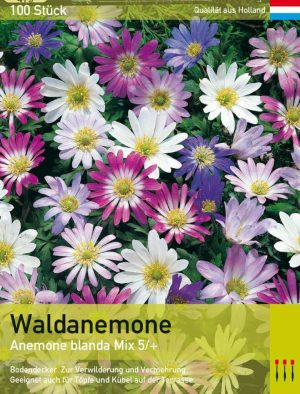 Waldanemone Mix