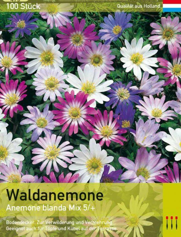 Waldanemone Mix
