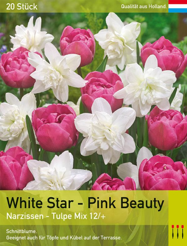 White Star - Pink Beauty