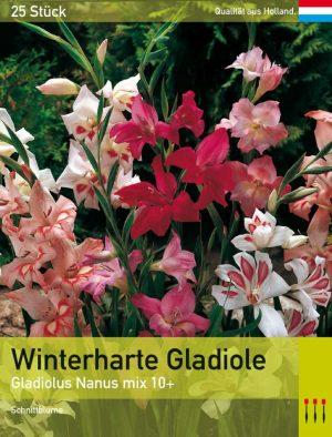 Niedrige Gladiole