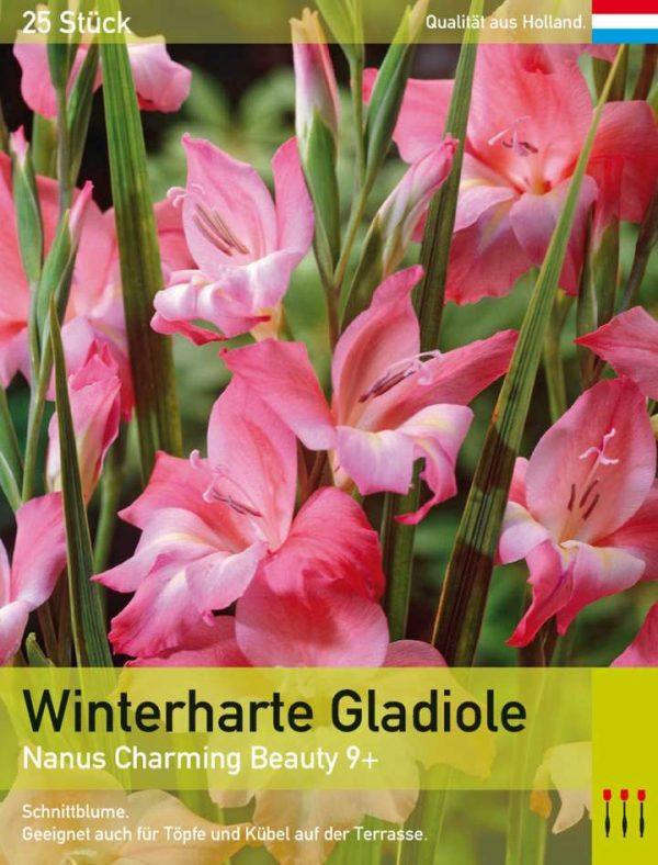Niedrige Gladiole 'Charming Beauty'