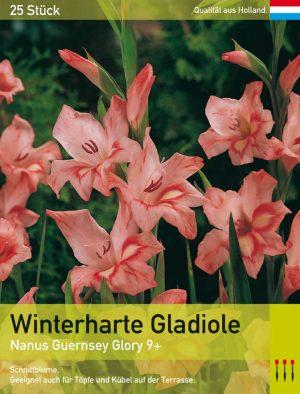Niedrige Gladiole 'Guernsey Glory'
