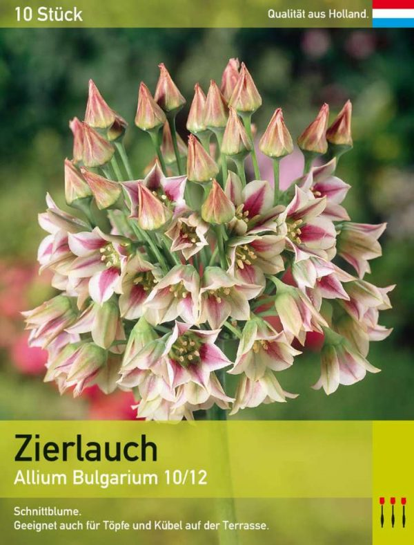 Allium Bulgarium
